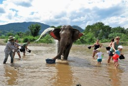 Week 31: Chiang Mai - I bathed an elephant and failed to write about it...