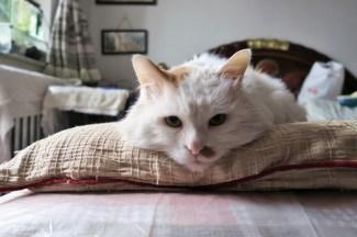 grandma's cat Neko