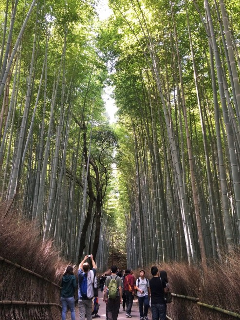 Week 29: Kyoto - the bamboo forest