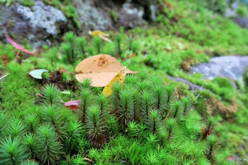 hakone-art-museum-moss-garden-3
