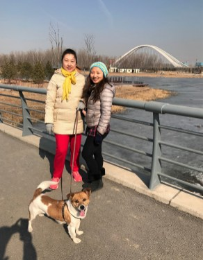 Week 49: Beijing - walks with Inu