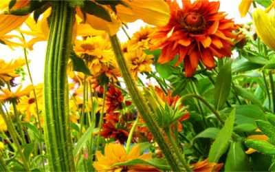 Tuinkalender september – Genieten van de nazomer