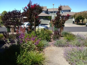 Sloat garden design