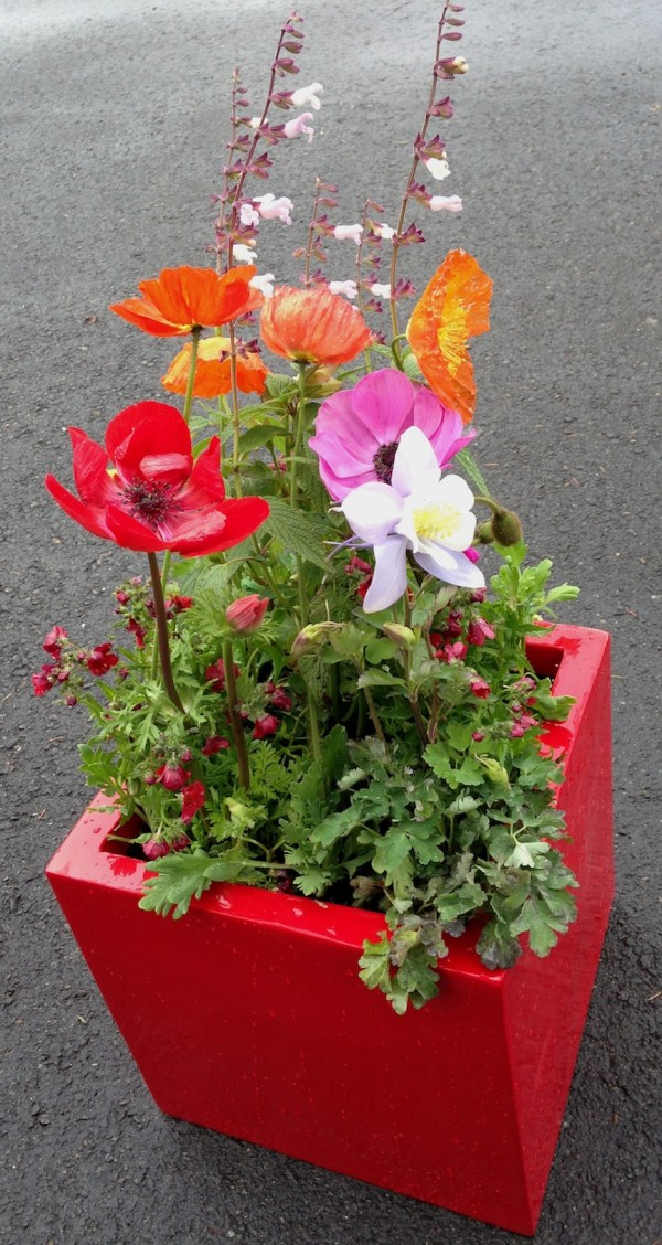 Custom Planters - Sloat Garden Center