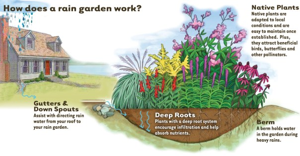 How Rain Garden works