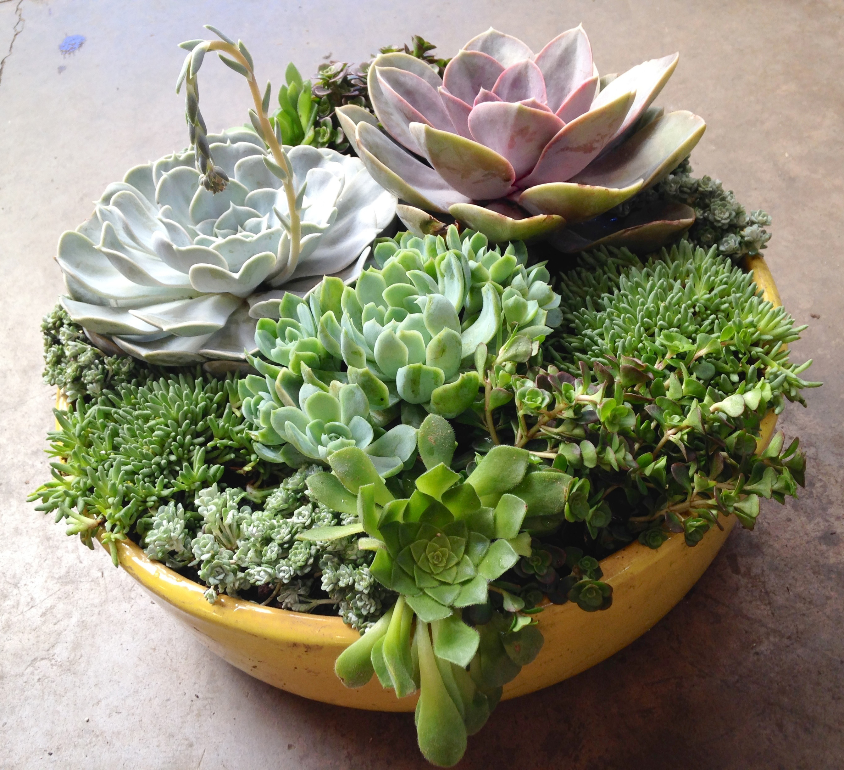 Diy Succulent Container Designs 3 Tips To Create Your Own Sloat