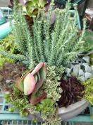 succulent custom planter 11