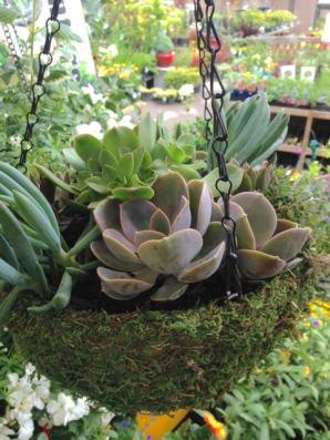 succulent custom planter aug7