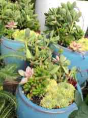 1. Succulent planters
