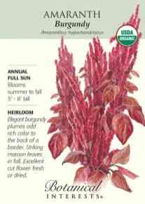 Burgundy Amaranth: Elegant burgundy plumes and foliage are striking at the back of the border.