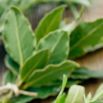 herbs on table