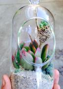 Terrariums filled with Succulents & Tillandsia