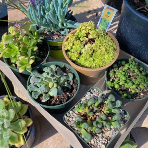 Everyone loves succulents!
