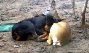 poplave životinje