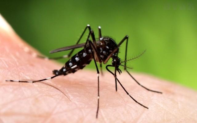 komarac komarci ubod