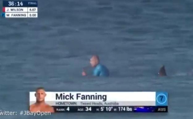 morski pas napad surfanje