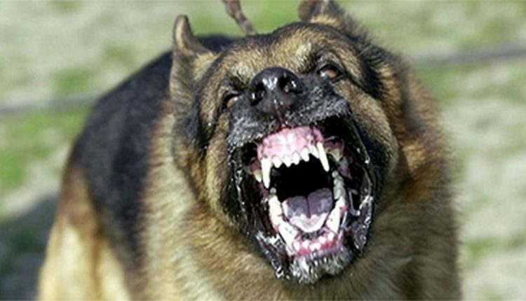 Маж и жена нападнати од куче скитник