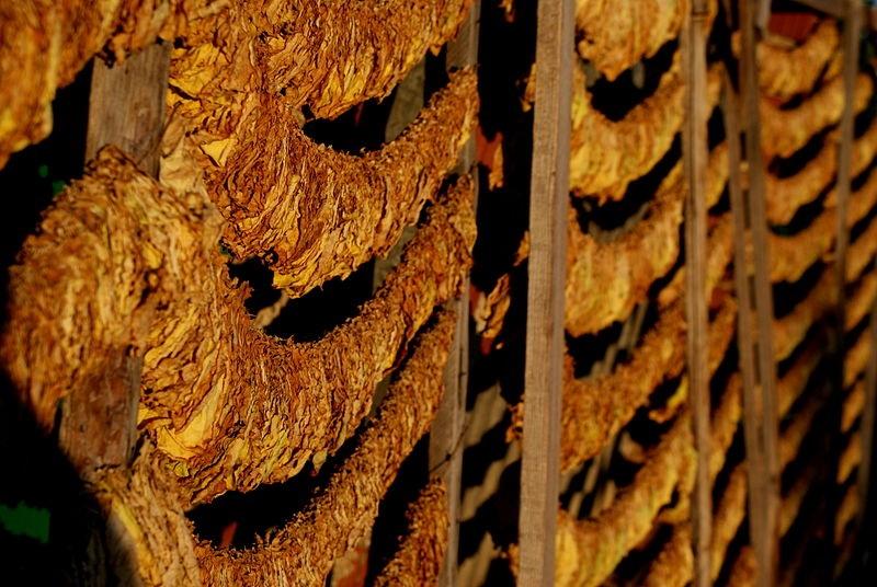 МЗШВ: Новиот закон ќе биде од корист за тутунопроизводителите