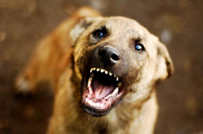 Американец настрада од куче скитник во Скопје
