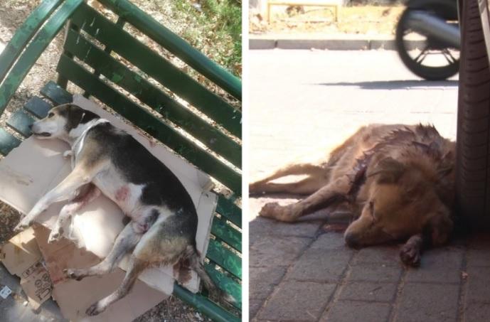 Уапсен малолетник кој со секира усмрти две кучиња