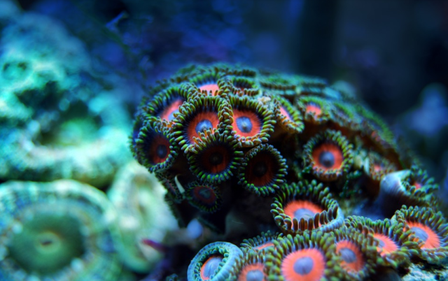 Coral is what you need to make your aquarium more alive
