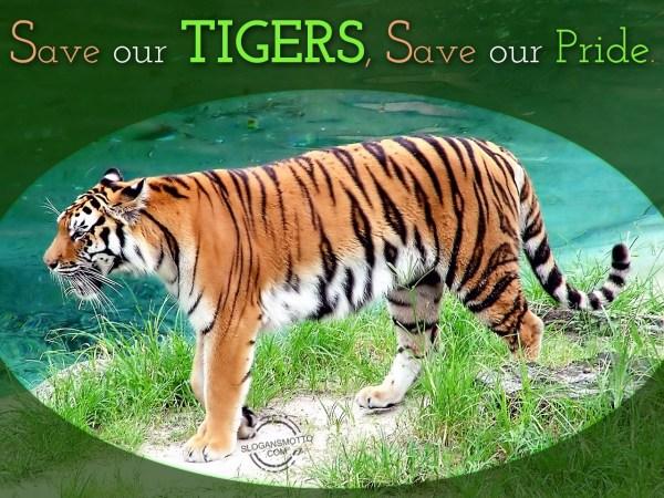 Slogans Saving Animals