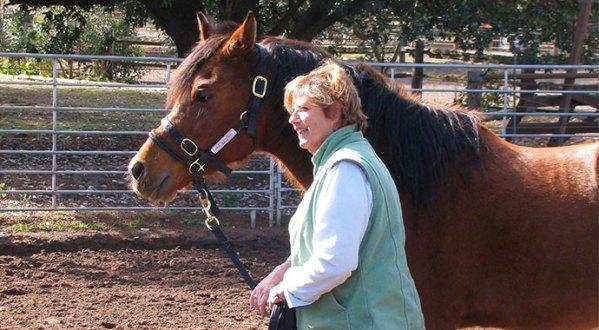 horses-as-coaches-beth-wonson