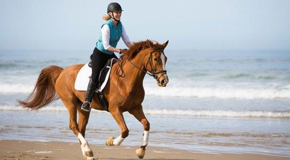 American Warmblood Dharma beach gallop