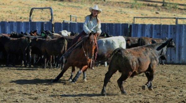 Windy Mathews working a cow