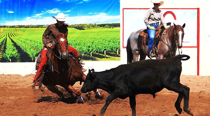 Madonna Ranch Cutting Horse