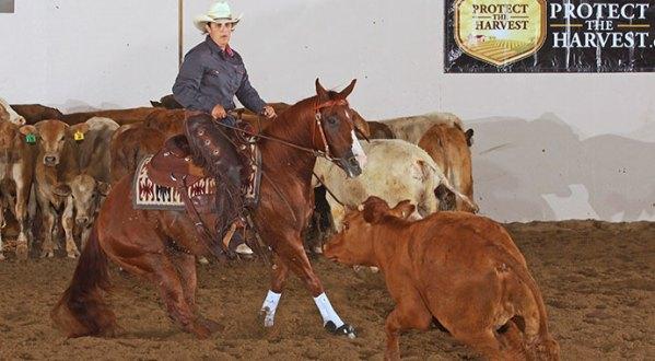 Marissa Greenberg Working A Cow