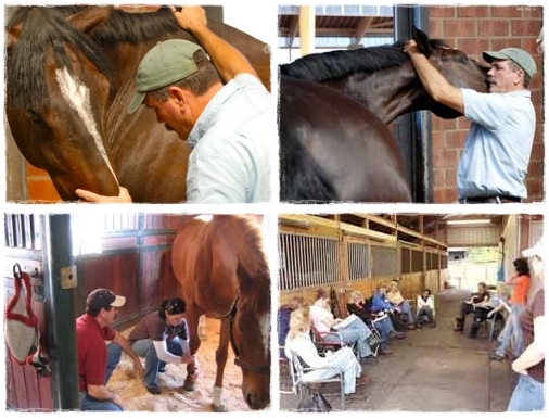 Learn How to Relieve Your Horse's Tension in This Hands-on Clinic   SLO Horse News