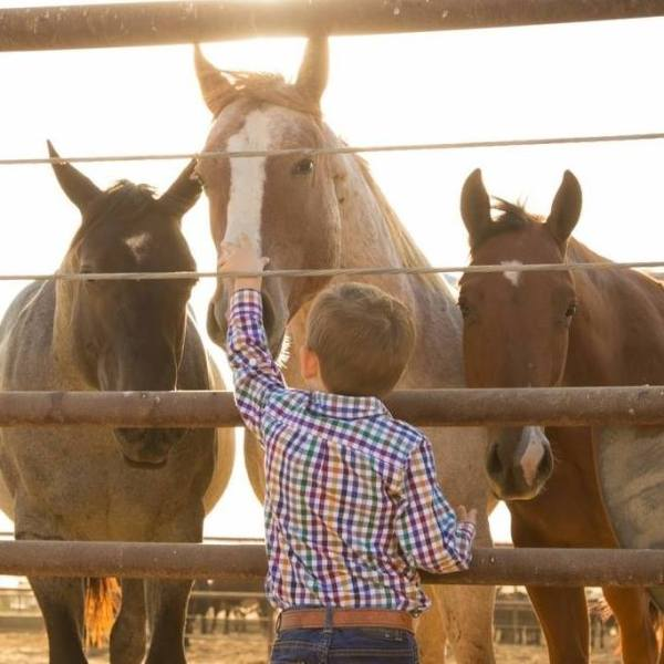 Come Hear the Chant – Rick Machado's Main Event Horse Auction | SLO Horse News