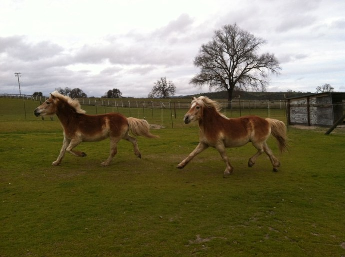 Turning Seized Horses into Adoptable Horses: Redwings Horse Rescue and Sanctuary | SLO Horse News