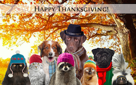 Image result for happy thanksgiving pictures  doberman