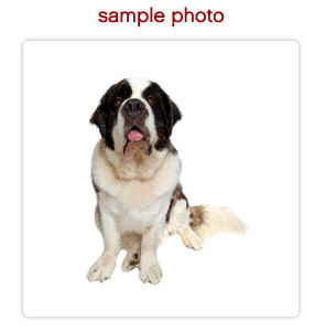 Make Your Dog Or Cat An Ecard Star Submit Front Pose
