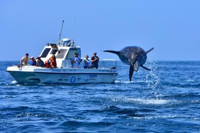 Amazing-Marine-Life-on-an-Algoa-Bay-Cruise