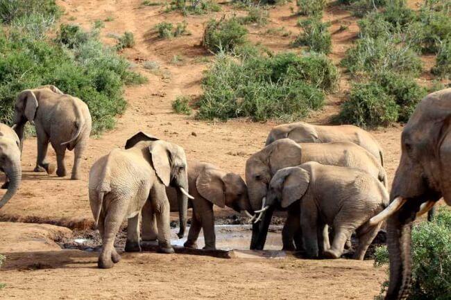 Go-on-Safari-at-Addo-Elephant-Park