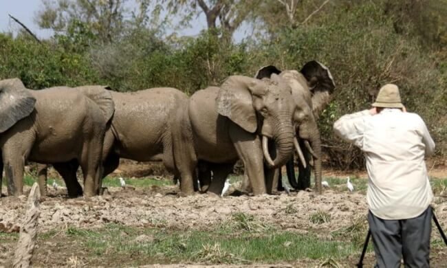Watch-Lions-and-Elephants-at-Queen-Elizabeth-National-Park