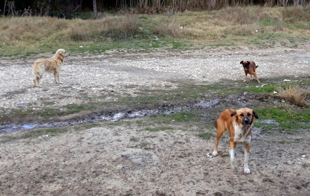 chiens roumanie slow and curious famille bouhier pillot