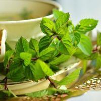 Formas de preparar las plantas medicinales