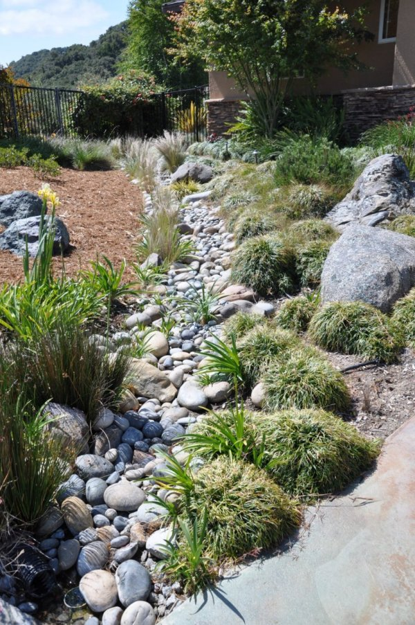 grasses in dry creek bed