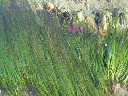 tidesurfgrass