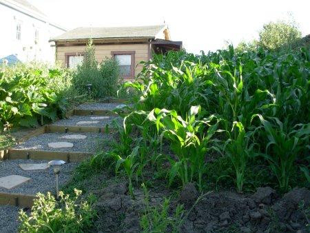cornyard1