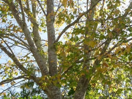 falltree5