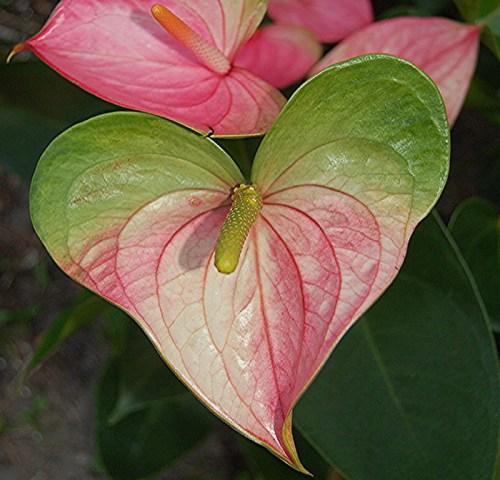 nature-heart12