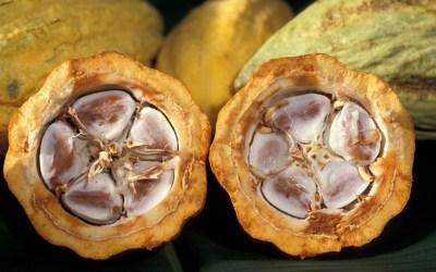 Mitch Match Impro Cacao-Choco