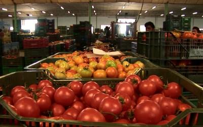 Tomaten und Paradeiser