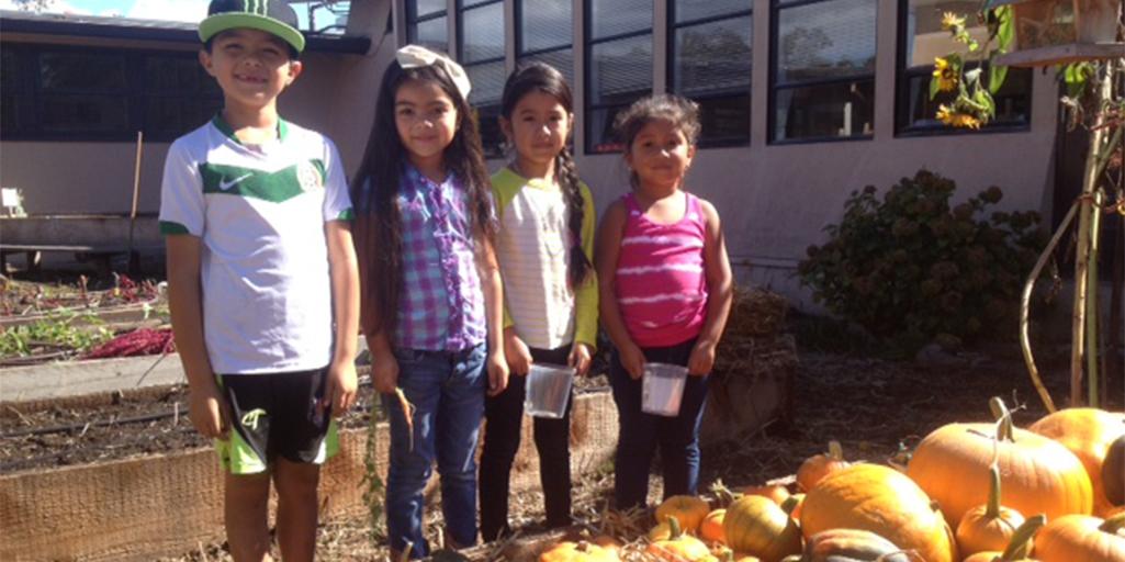 Steele Lane Elementary Looking for a Garden Coordinator