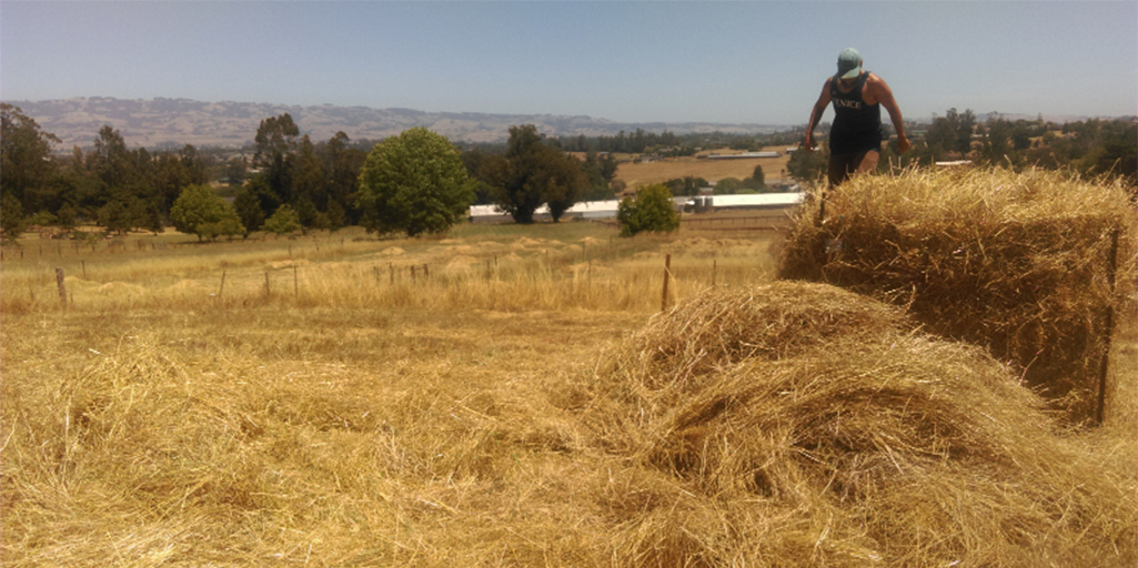 Roy doing some Old-Wolrld Style Haying in Sonoma County, California